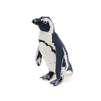 Cape_penguin_1