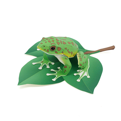 Forestgreentreefrog_1